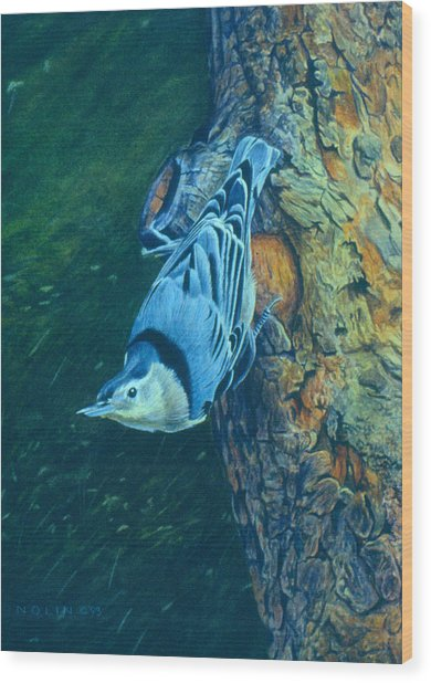 Wood Print featuring the painting Nuthatch by Bob Nolin