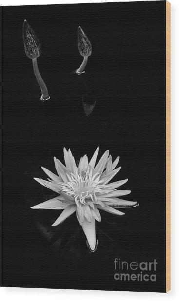 Nymphaea Foxfire Wood Print by Tim Gainey