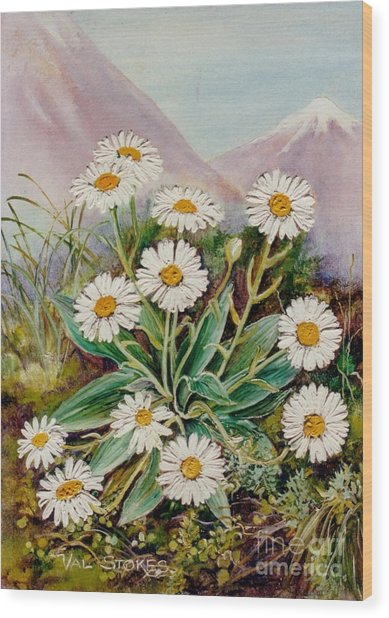 Nz Mountain Daisy Wood Print by Val Stokes