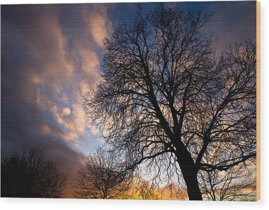 Oak Against The Sky Wood Print