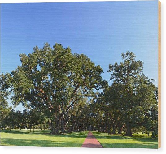 Oak Alley Plantation Panoramic Wood Print