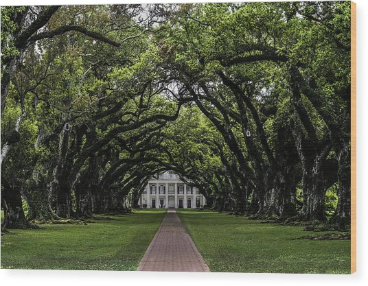 Oak Alley Plantation, Vacherie, Louisiana Wood Print
