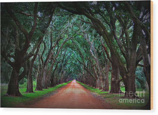 Oak Alley Road Wood Print