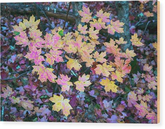 Oak Creek Canyon Fall Colors Wood Print