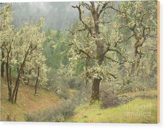 Oak Forest Wood Print by Frank Townsley