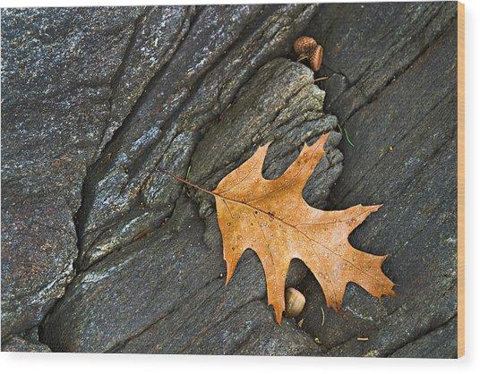 Oak Leaf On The Rocks Photo Wood Print by Peter J Sucy