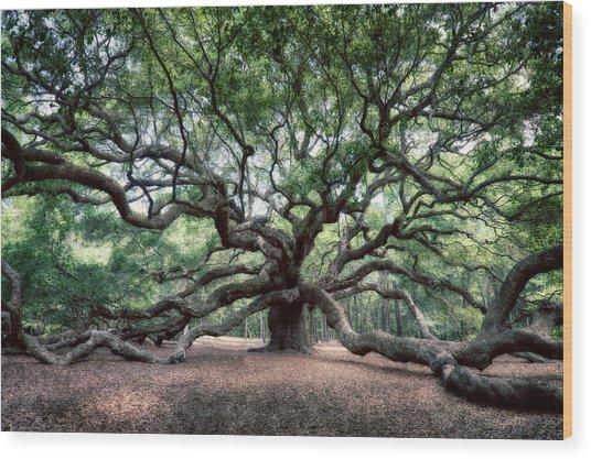 Oak Of The Angels Wood Print