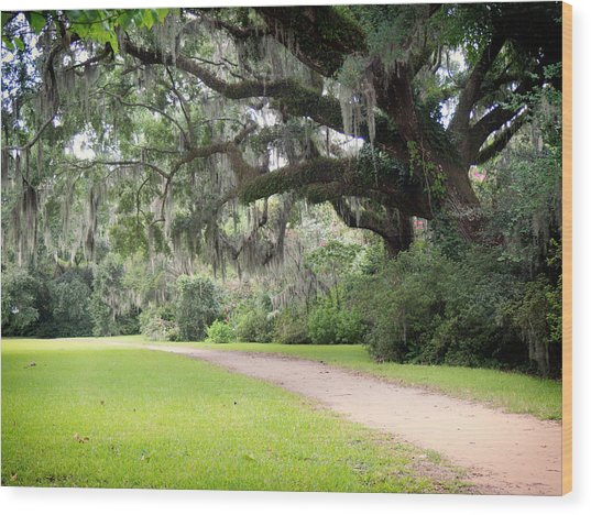 Oak Over The Trail Wood Print