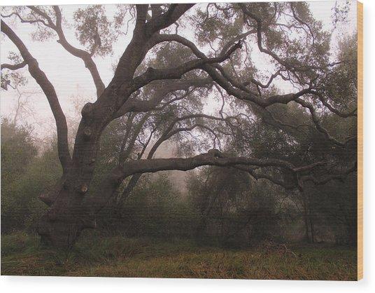 Oak Sentinel With Coastal Fog Wood Print by Robin Street-Morris
