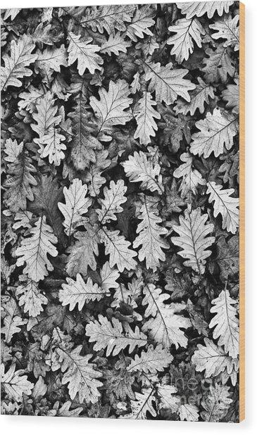 Oak Wood Print