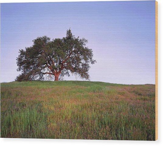 Oak Tree Glow Wood Print