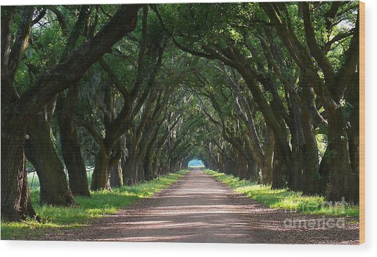 Oak Tree Path Wood Print