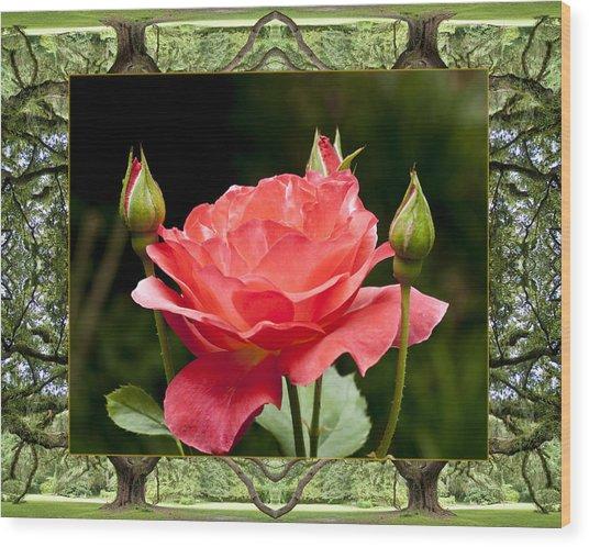 Oak Tree Rose Wood Print