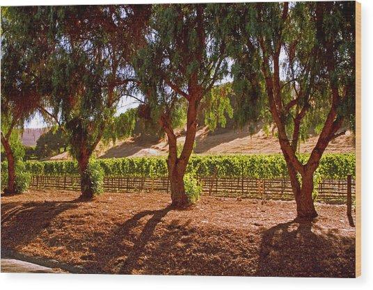 Oak Trees And Vines Wood Print