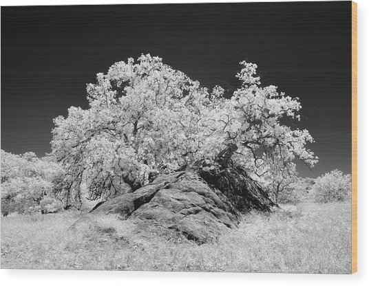 Oak With Boulder I Wood Print by Joseph Smith