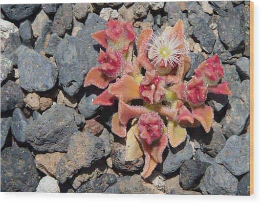 Oasis - Tenerife Ice Plant Wood Print