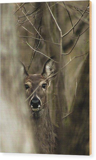 Observed  Wood Print
