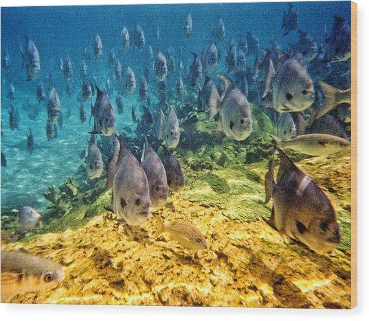 Oceans Below Wood Print