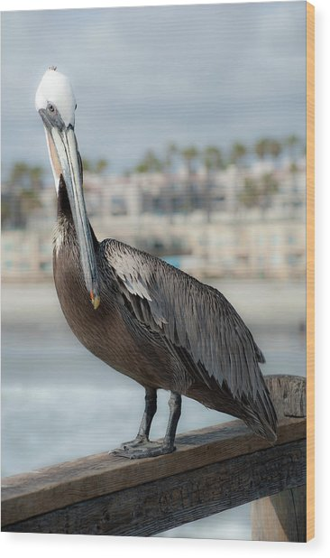 Oceanside Pelican Wood Print