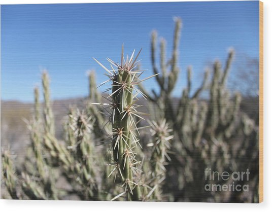 Wood Print featuring the photograph Ocotillo by Antonio Romero