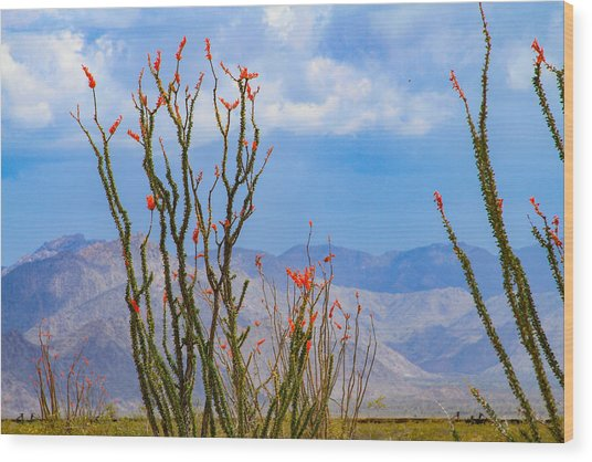 Ocotillo Cactus With Mountains And Sky Wood Print