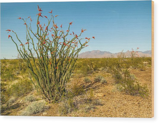 Ocotillo Wood Print