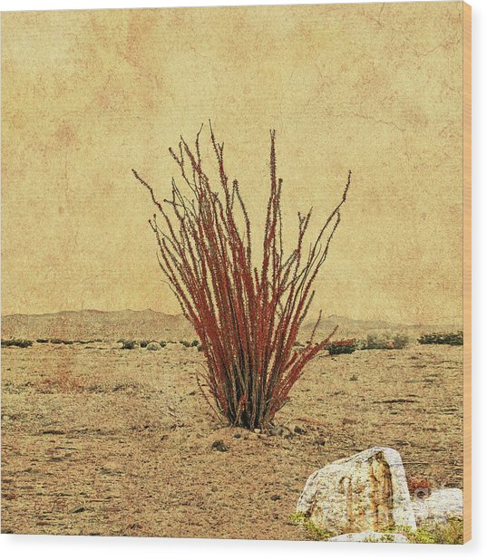 Ocotillo - The Desert Coral Wood Print