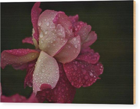 October Rose In The Rain Wood Print