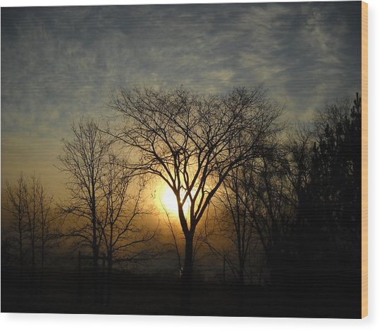 October Sunrise Behind Elm Tree Wood Print