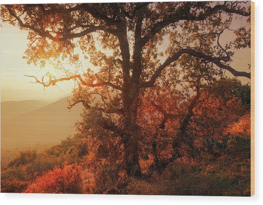 October Sunset Wood Print
