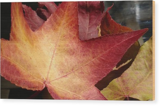 Of Fall Wood Print by Frederick Messner