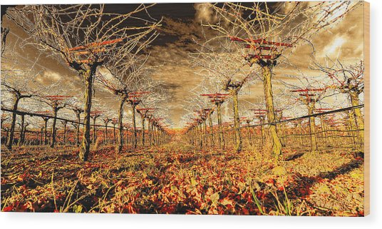 Off Of The Vine Wood Print