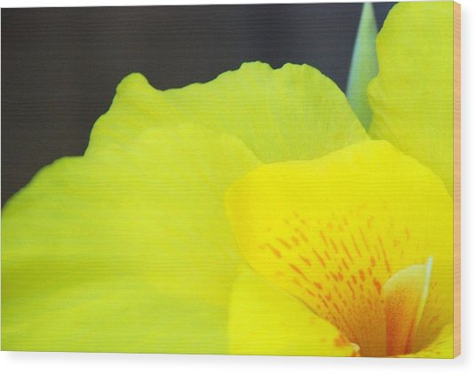 Oh Canna You See Wood Print by Diane Fiore
