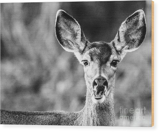 Oh, Deer, Black And White Wood Print
