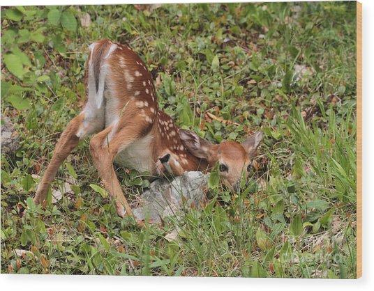 Oh Deer Little Fawn Wood Print