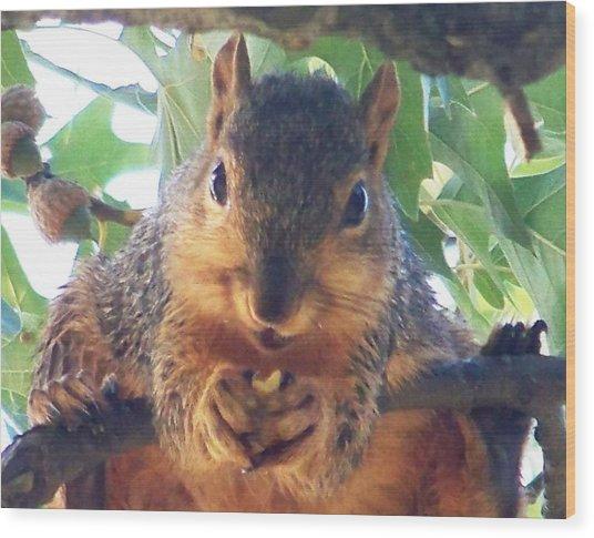 Oh Nuts Wood Print by Linda Henriksen