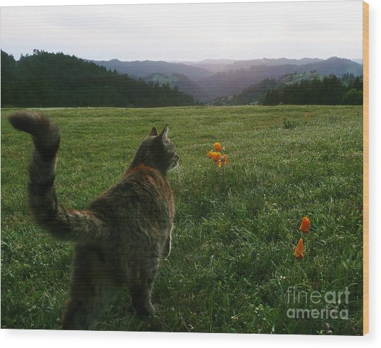Oh What A Beautiful Day Wood Print by JoAnn SkyWatcher