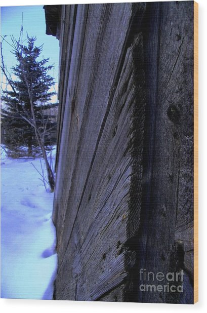 Old And Young Spruce Wood Print by The Stone Age