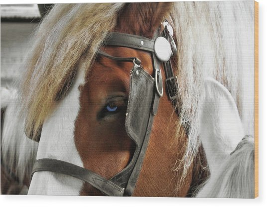 Old Blue Eyes Savannah Wood Print by JAMART Photography