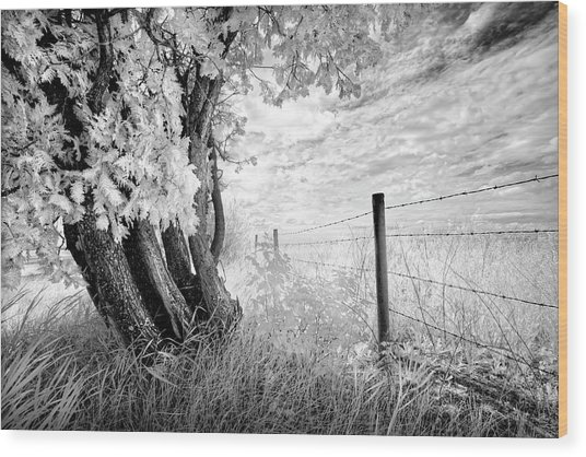 Old Cedar And Barbed Wire Wood Print