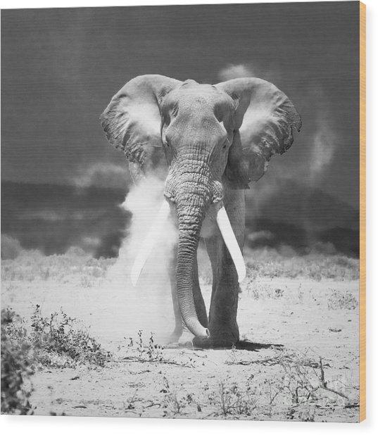 Old Elephant At Amboseli National Park Kenya Wood Print by Konstantin Kalishko