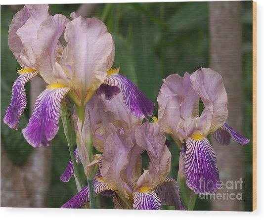 Old-fashioned Iris Wood Print