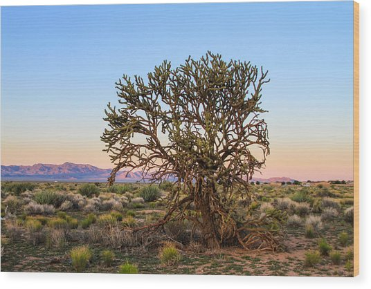 Old Growth Cholla Cactus View 2 Wood Print