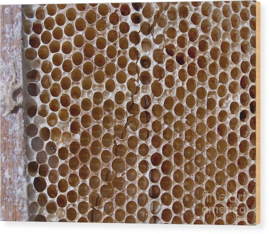 Old Honey Comb Bee Hive  Wood Print by Kathy Daxon