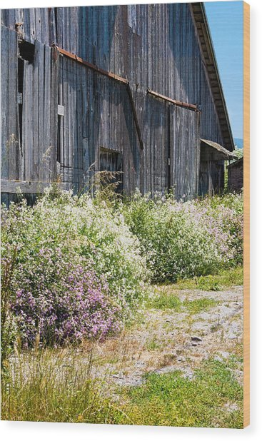 Old Milking Barn Wood Print