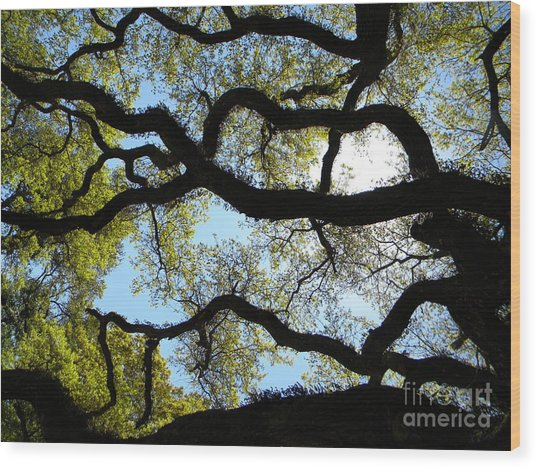Old Oak Wood Print by JoAnn Wheeler