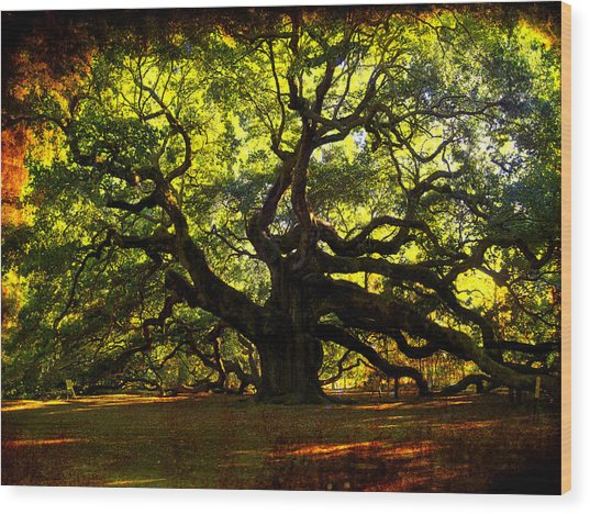 Old Old Angel Oak In Charleston Wood Print