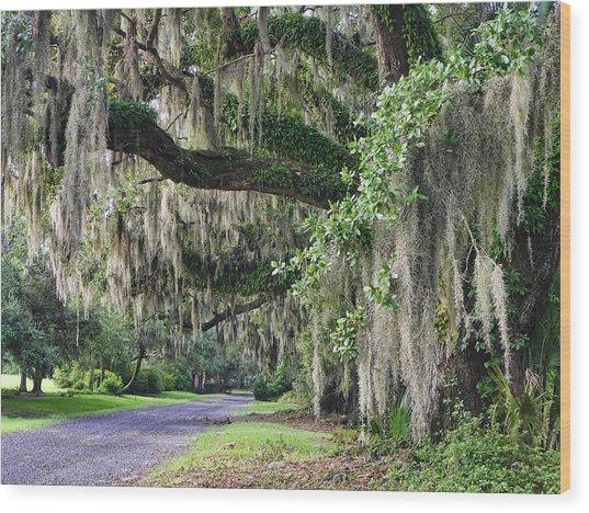 Old Plantation Road Wood Print