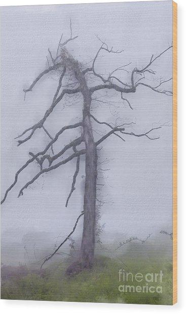 Old Tree In Fog In The Blue Ridge Ap Wood Print
