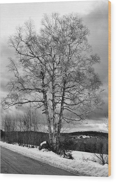 Old White Birch Wood Print